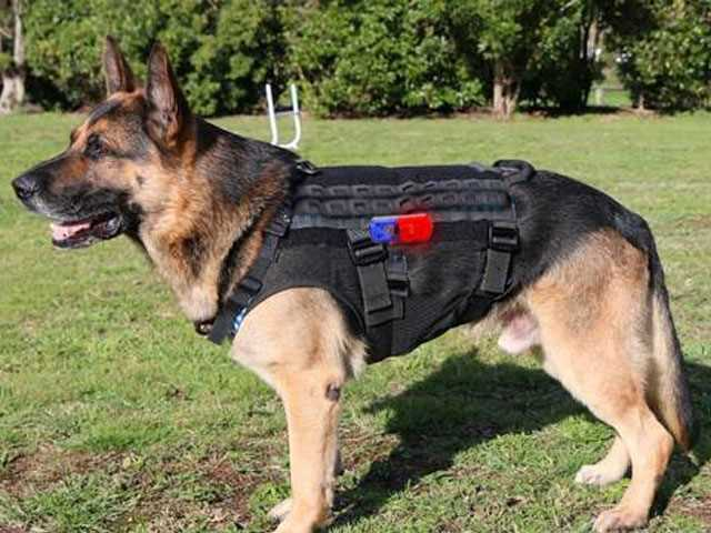 Dog Harnesses and Their Use