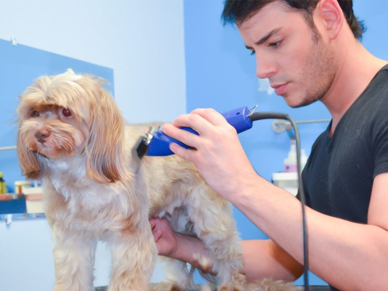 Tools for grooming pet dogs